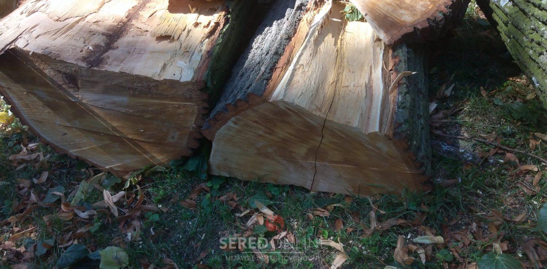 Drevo kmeňa sa v rukách pilčíkov rozpadlo na dve polovice úplne samo.